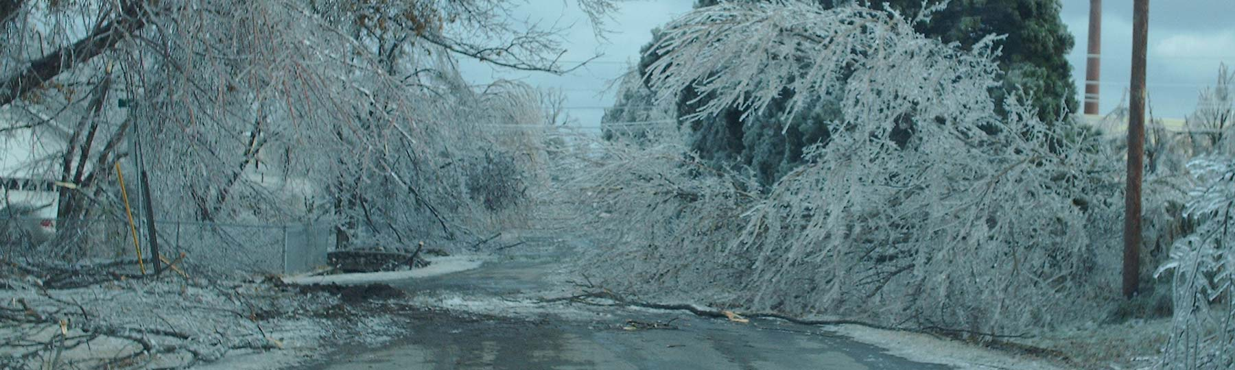 A heavy ice-covered tree branch blocking the road